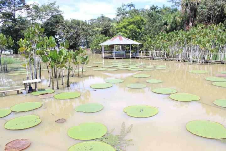 Overnight amazon lodge Iquitos Peru