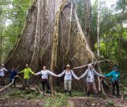 Pacaya Samiria National Reserve Lupuna tree