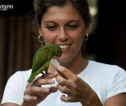 Pacaya Samiria National park parrot