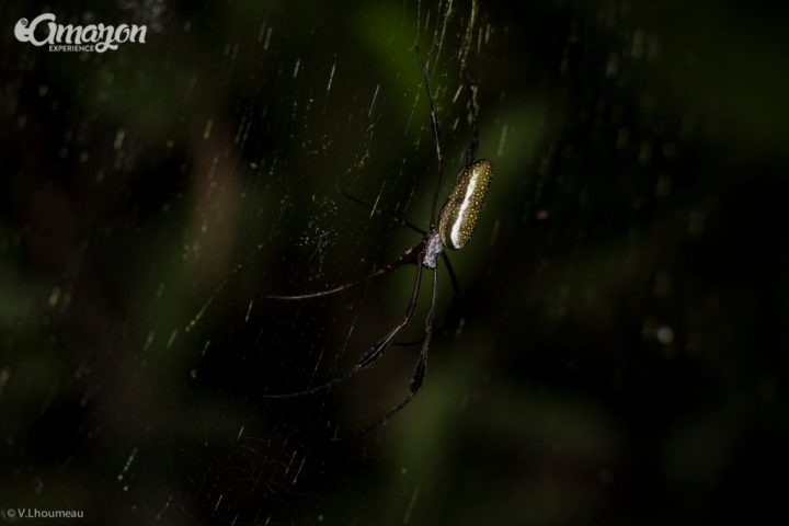 A spider in the biggest jungle in the world