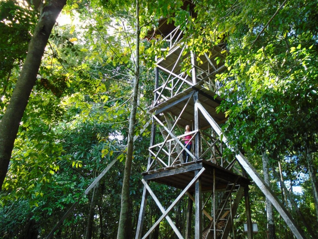 Impressive 3 floor wooden tower in the Amazon jungle