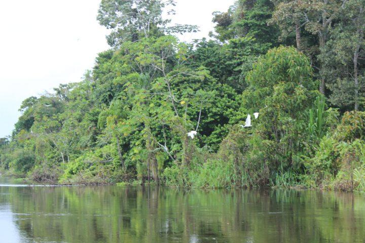 Amazon landscapes