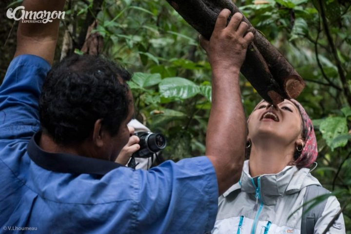 Drinking water from a vine in the Amazon jungle