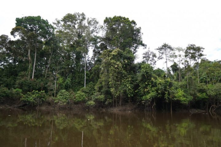 Beautiful landscape of the Amazon rainforest