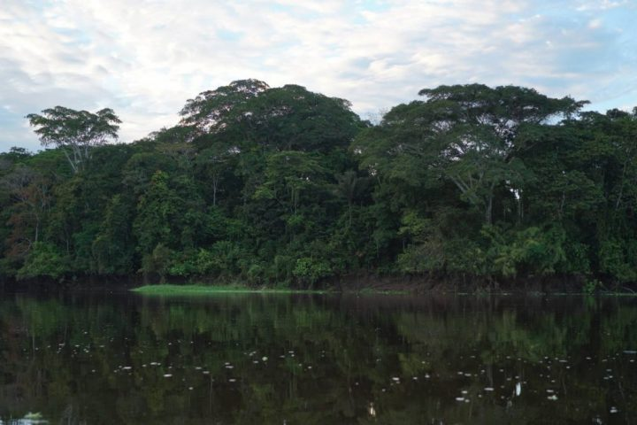 Tropical forest, Pacaya Samiria