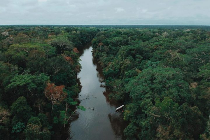Drone picture of tropical rainforest. Pacaya Samiria reserve.